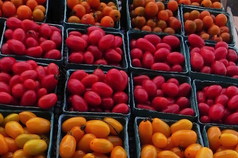 cherry tomatoes rhinebeck farmers market