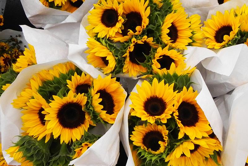 rhinebeck farmers market sunflowers