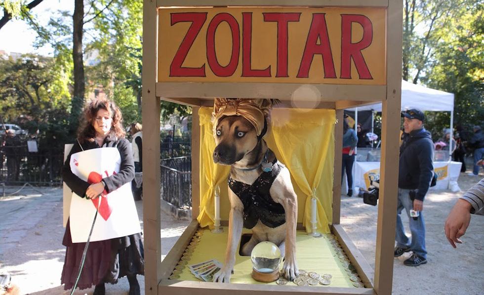 Tompkins Square Park Halloween Dog Parade 2013